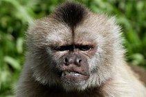 MonkeyLookingAngry